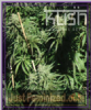 Kush Seeds Sour Kush Female 10 Cannabis Seeds